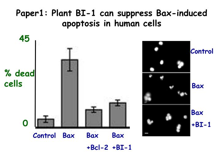 Paper1: Plant BI-1 can suppress Bax-induced apoptosis in human cells