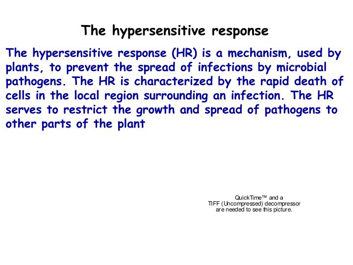 The hypersensitive response