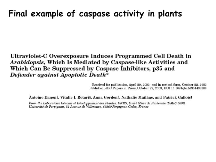 Final example of caspase activity in plants