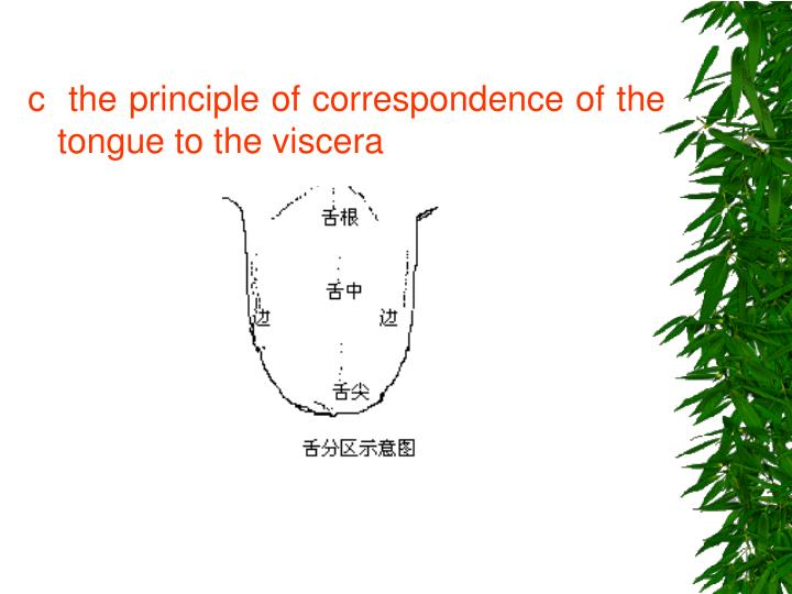 c  the principle of correspondence of the tongue to the viscera