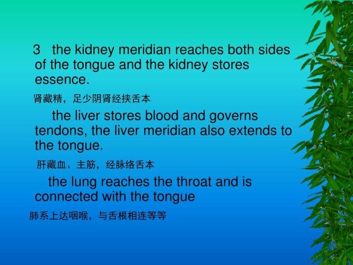 3   the kidney meridian reaches both sides of the tongue and the kidney stores essence.