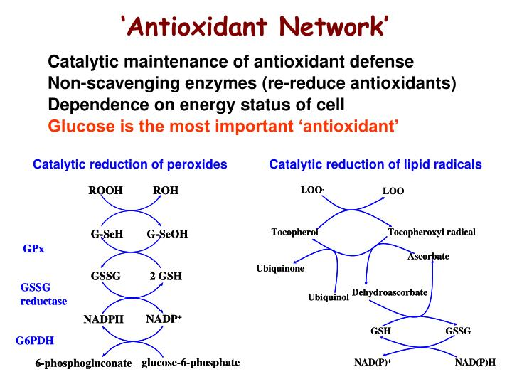 antioxidant enzymes thesis Thesis, plant physiology skip krishikosh on morpho- physiological, biochemical and antioxidant enzymes activity on field pea (pisum sativum l) genotypes.