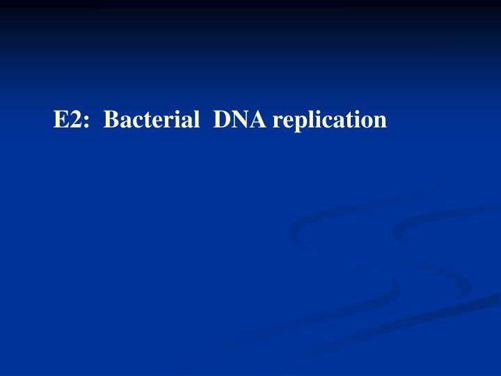 E2:  Bacterial  DNA replication
