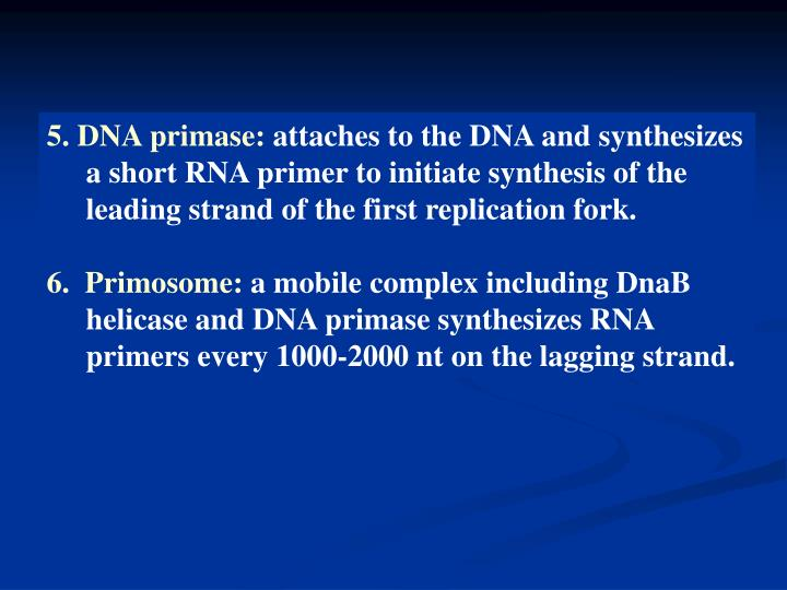 5. DNA primase: