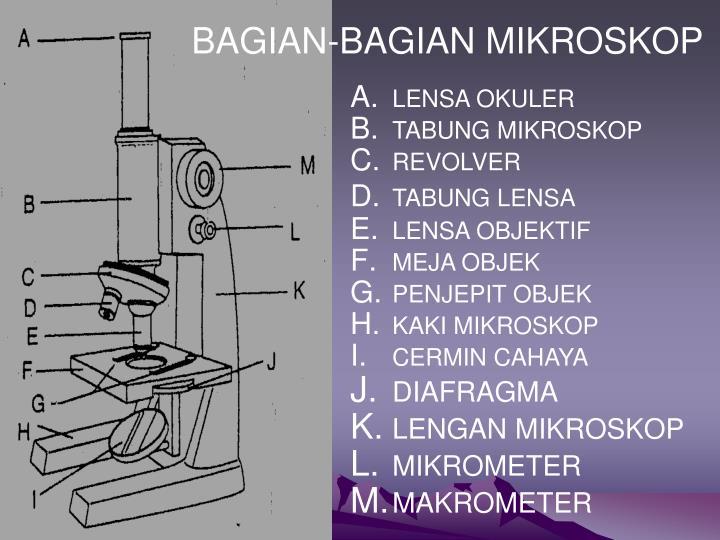 Bagian bagian dari mikroskop cahaya mikroskop penjelasan lengkap