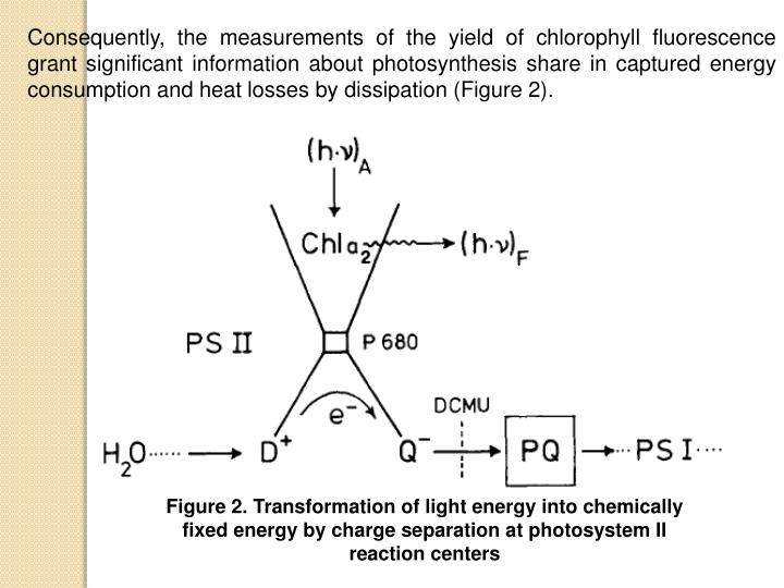 Consequently, the measurements of the yield of chlorophyll fluorescence grant significant information about photosynthesis share in captured energy consumption and heat losses by dissipation (Figure 2).