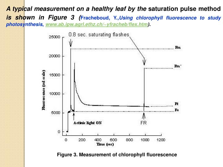 A typical measurement on a healthy leaf by the