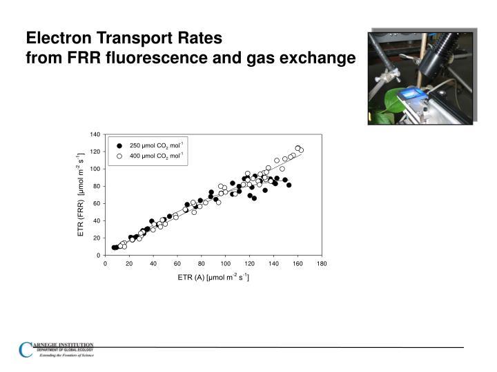 Electron Transport Rates