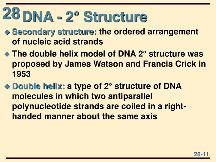 DNA - 2° Structure