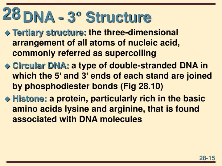 DNA - 3° Structure