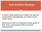 how the brain develops1