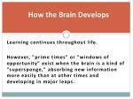 how the brain develops2