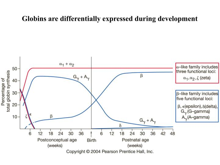 Globins are differentially expressed during development