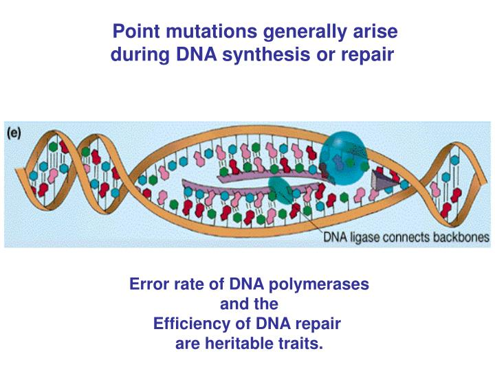Point mutations generally arise