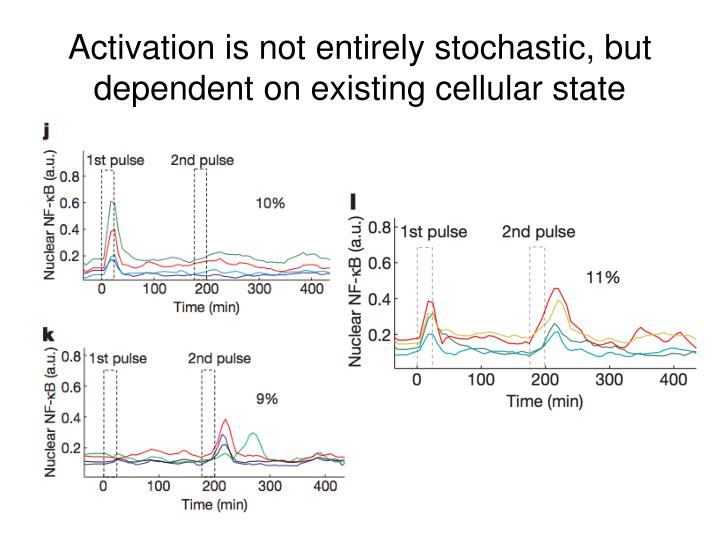 Activation is not entirely stochastic, but dependent on existing cellular state