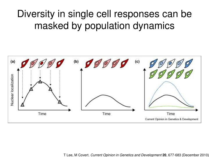 Diversity in single cell responses can be masked by population dynamics