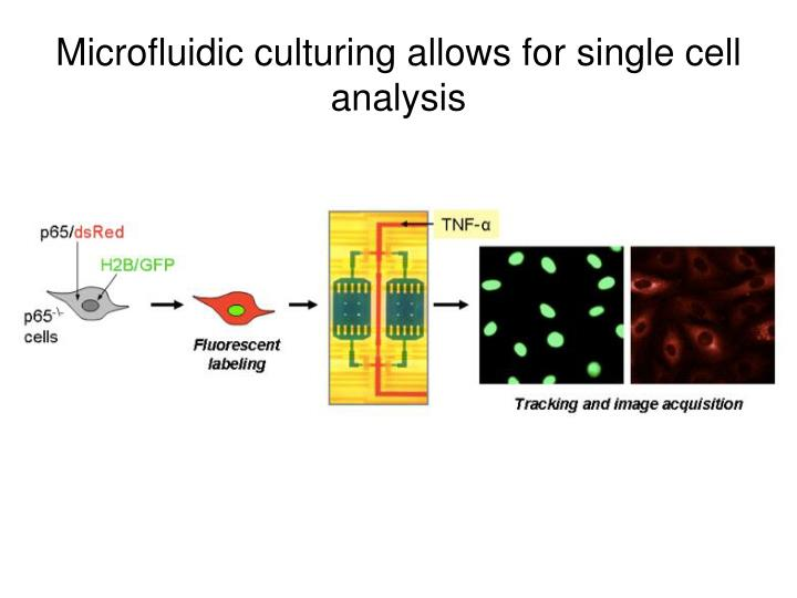 Microfluidic culturing allows for single cell analysis