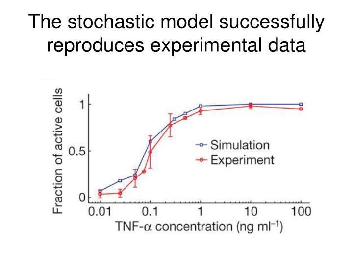 The stochastic model successfully reproduces experimental data