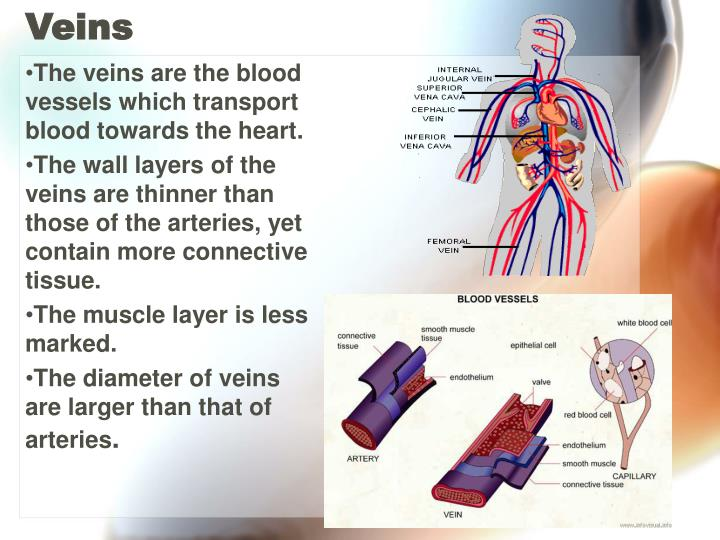 The veins are the blood vessels which transport blood towards the heart.