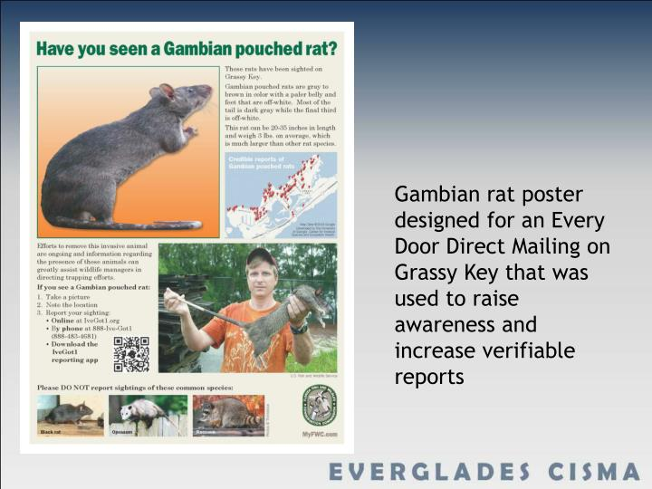 Gambian rat poster designed for an Every Door Direct Mailing on Grassy Key that was used to raise awareness and increase verifiable reports