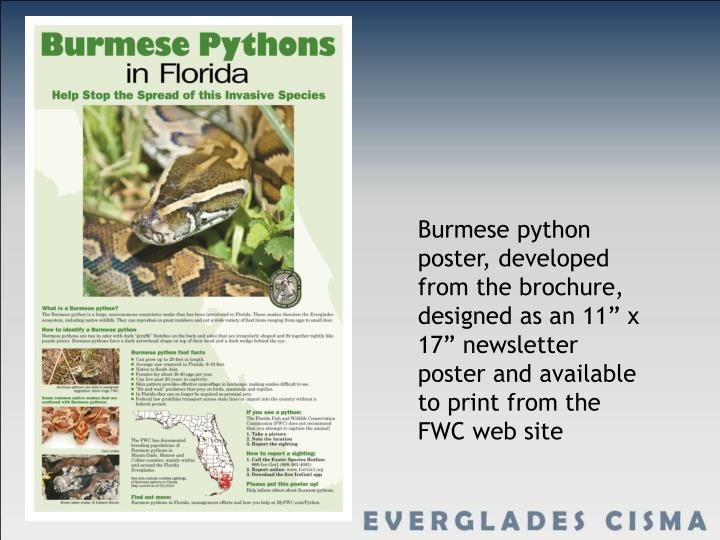 """Burmese python poster, developed from the brochure, designed as an 11"""" x 17"""" newsletter poster and available to print from the FWC web site"""