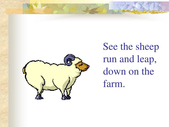 See the sheep run and leap, down on the farm.