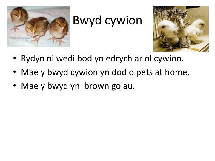 Bwyd cywion
