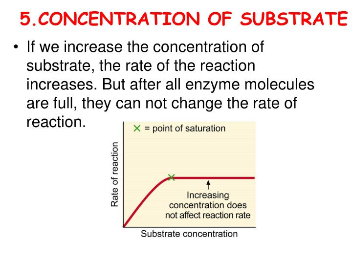 5.CONCENTRATION OF SUBSTRATE