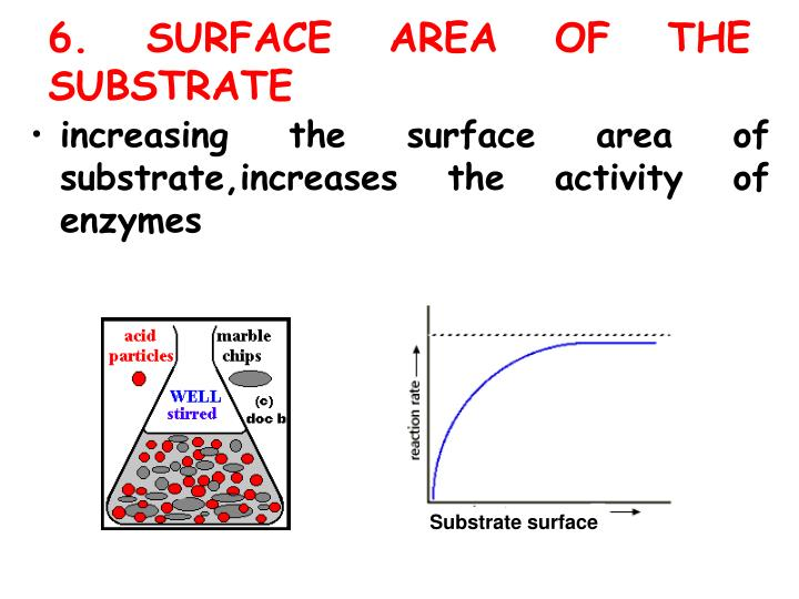 6. SURFACE AREA OF THE SUBSTRATE