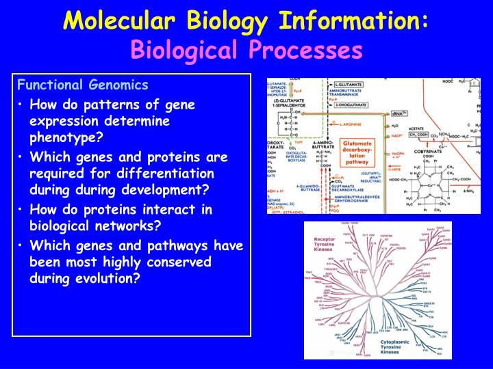 biology isu Biological sciences 202 life sciences building baton rouge, la 70803 telephone: (225) 578-2601 fax: (225) 578-2597.