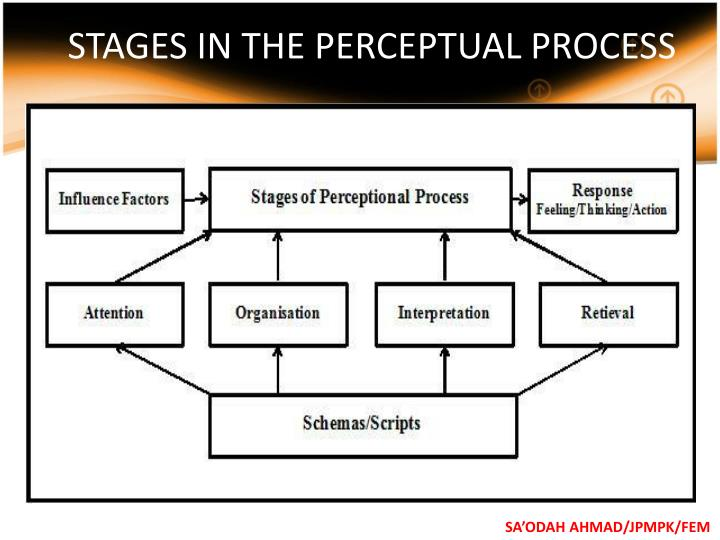STAGES IN THE PERCEPTUAL PROCESS