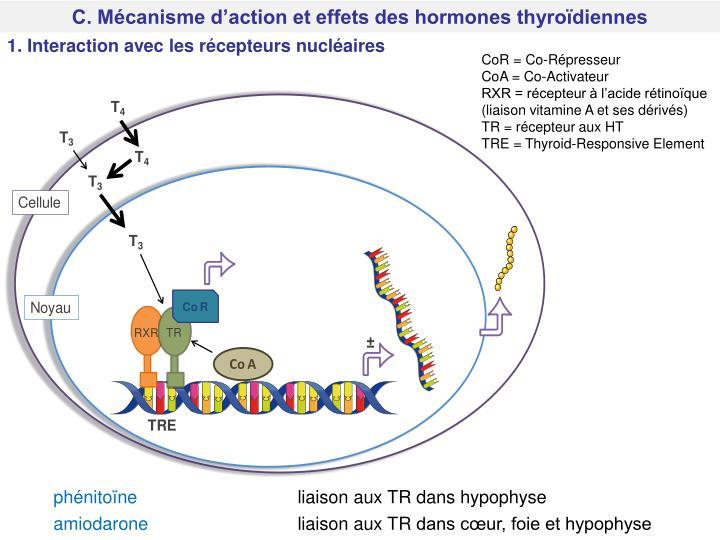 C. Mécanisme d'action et effets des hormones thyroïdiennes