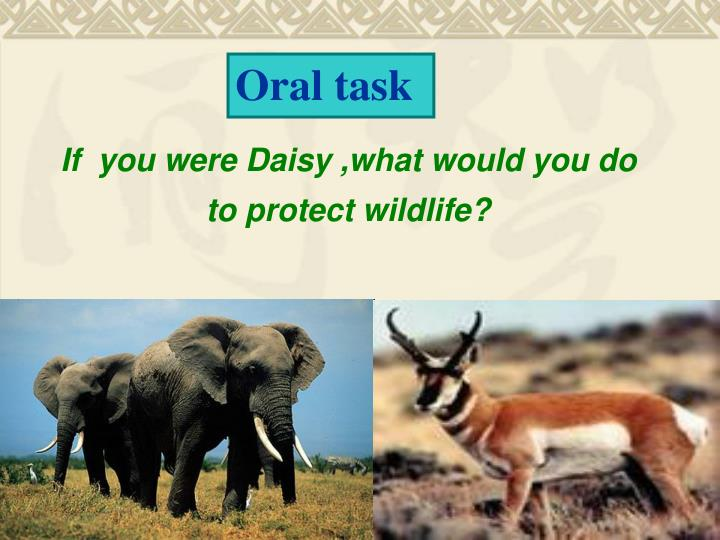 If  you were Daisy ,what would you do  to protect wildlife?