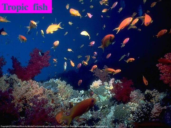 Tropic  fish