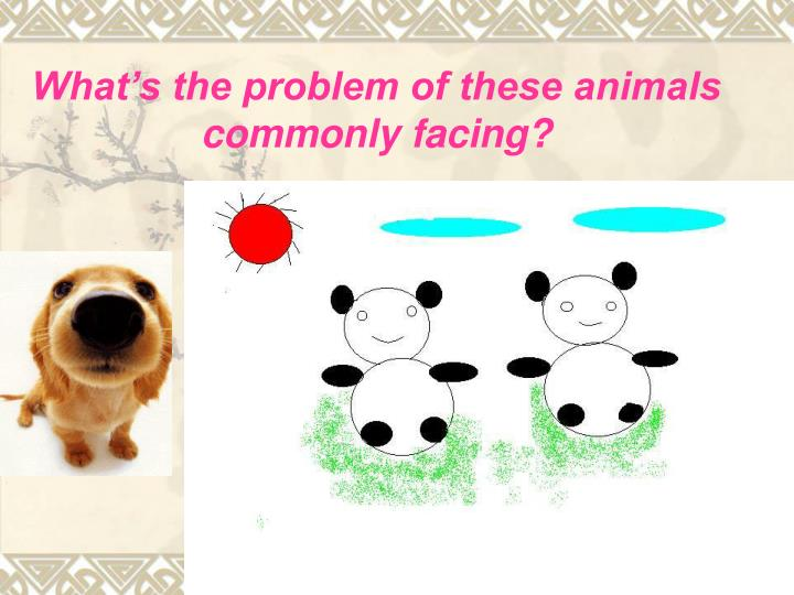 What's the problem of these animals commonly facing?