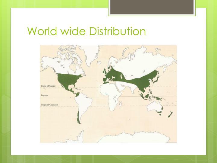World wide distribution