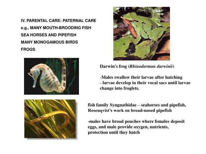 IV. PARENTAL CARE: PATERNAL CARE