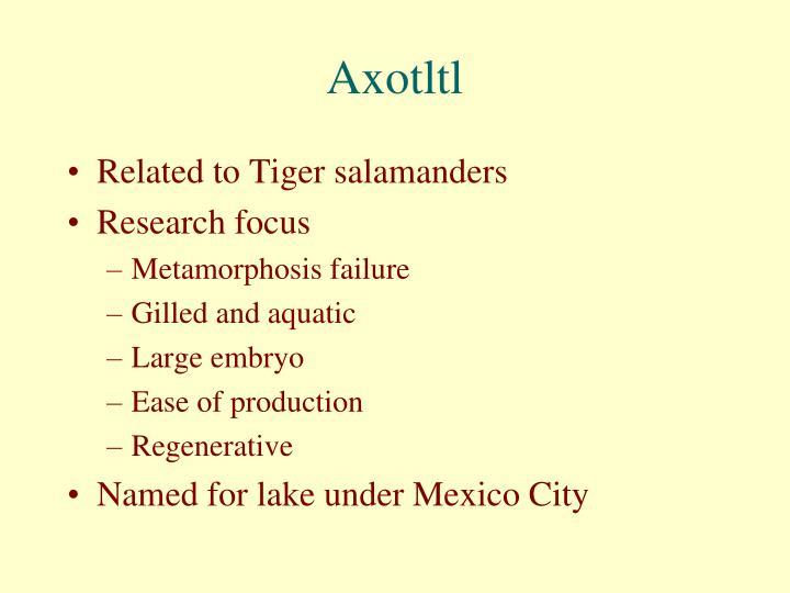Axotltl