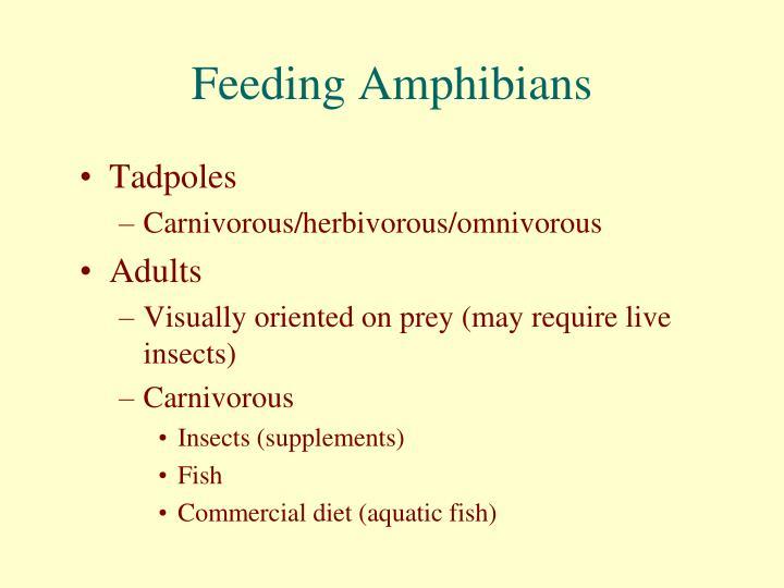 Feeding amphibians