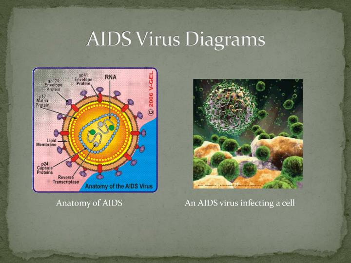 The history genesis and detection of the aids virus Coursework Service