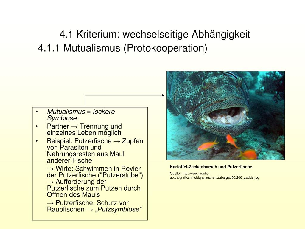 Ppt Symbiosen Powerpoint Presentation Free 7