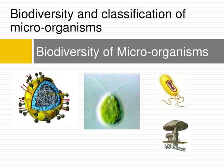 biodiversity of micro organisms n.