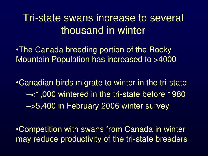 Tri-state swans increase to several thousand in winter