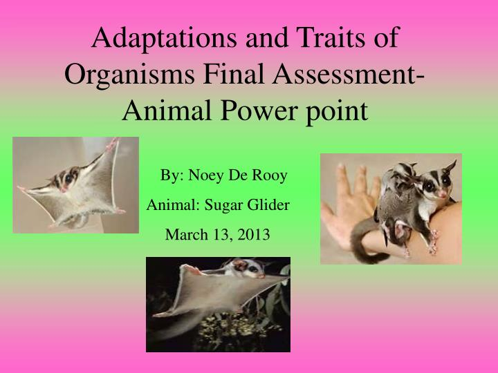 adaptations and traits of organisms final assessment animal power point n.