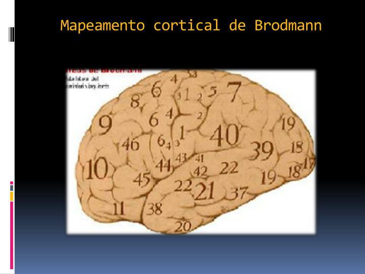 Mapeamento cortical de