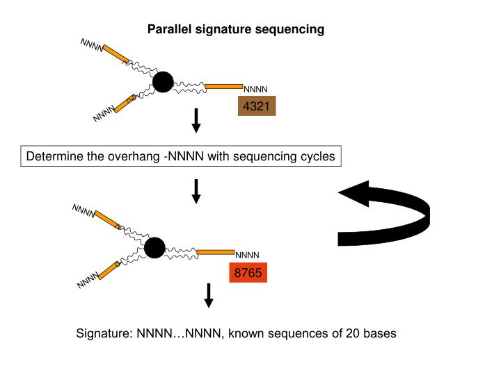 Parallel signature sequencing