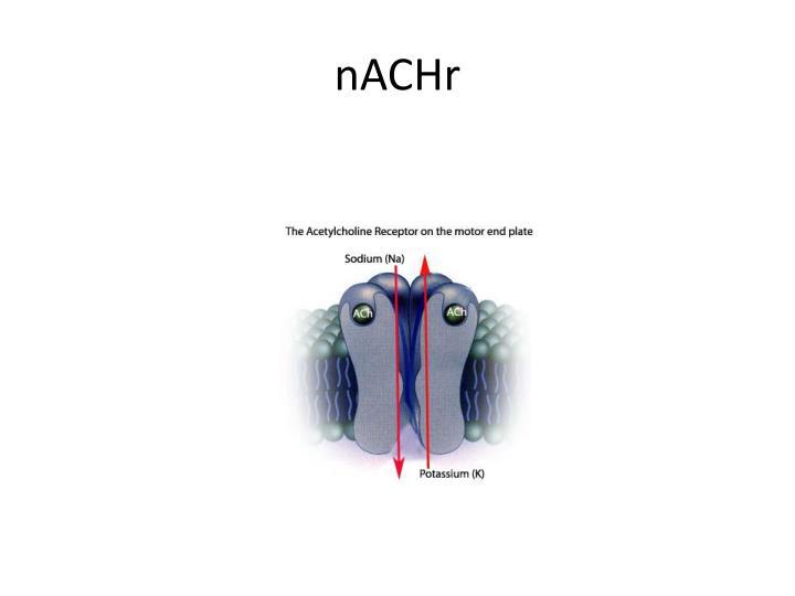 nACHr