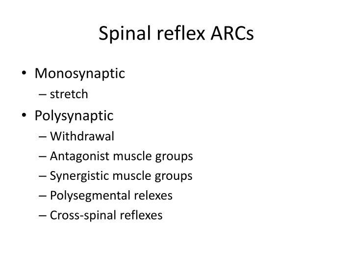 Spinal reflex ARCs