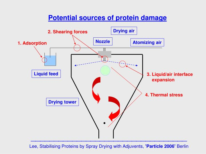 Potential sources of protein damage
