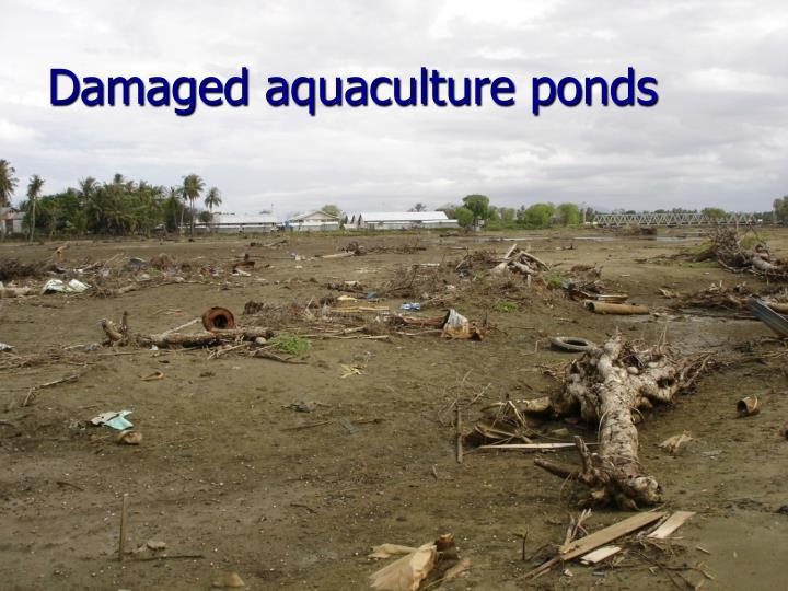 Damaged aquaculture ponds
